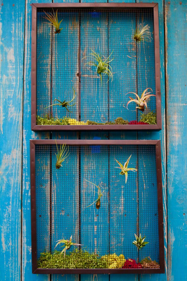 Natural-simple-air-succulents-also-add-a-lot-of-texture-and-interest-to-any-wall